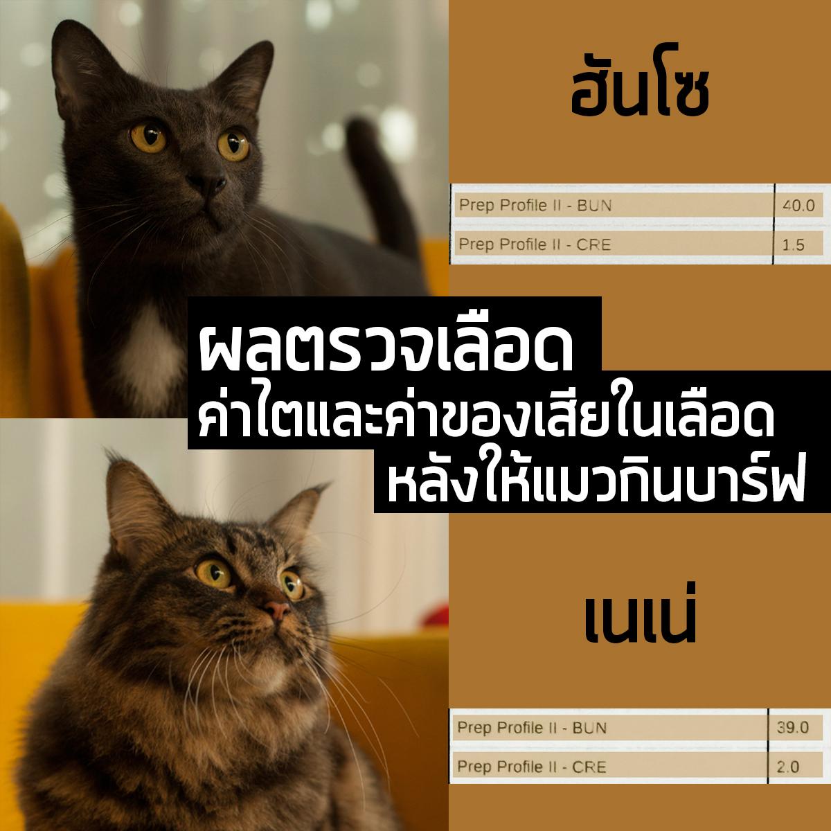 ให้แมวกินบาร์ฟทำให้ค่าไตสูงจริงหรือไม่? (ตอนที่ 2)