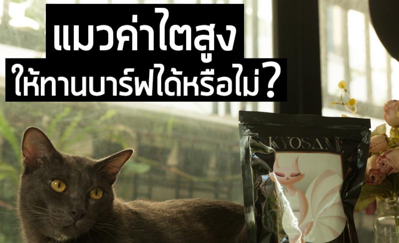 แมวค่าไตสูงควรให้แมวทานบาร์ฟต่อไปหรือไม่?
