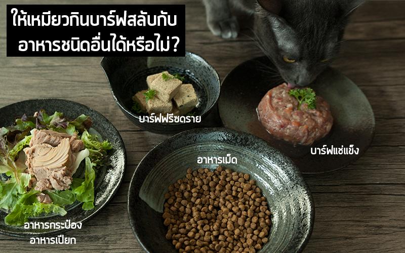 ให้แมวกินบาร์ฟสลับกับอาหารชนิดอื่นได้หรือไม่?