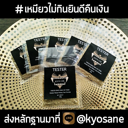 TESTER Kyosane Freeze-Dried Raw Cat Food Chicken Recipe Kidney Care Formula