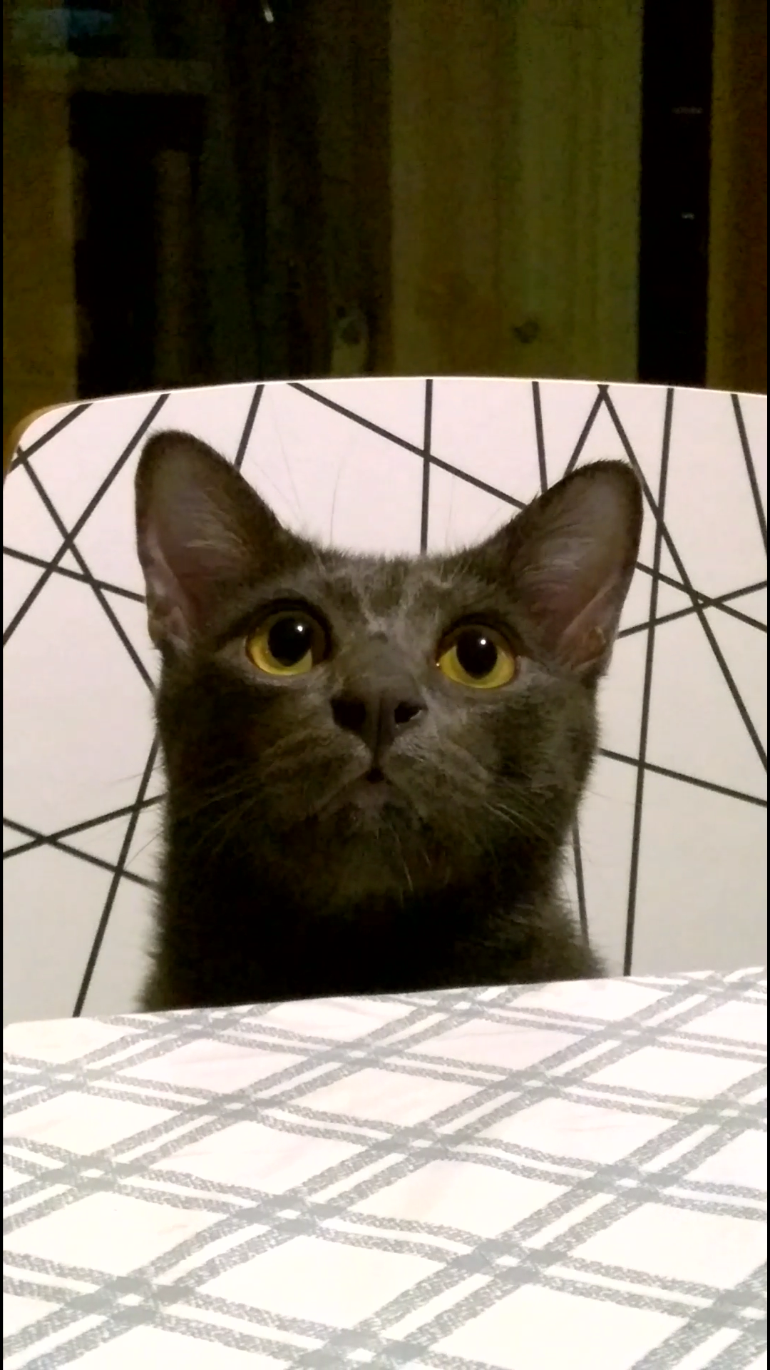 มีแมวต้องมีทอรีน